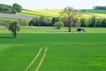 Rehe In Den Feldern Der Thüre...