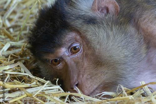 Fotografie, Obraz Vita in cattività, lo sguardo