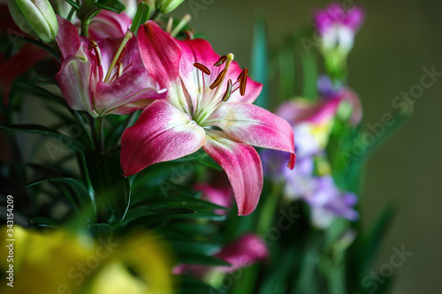 Pink and White Asiatic Lily, Lilium auratum, growing in a beautiful garden Wallpaper Mural