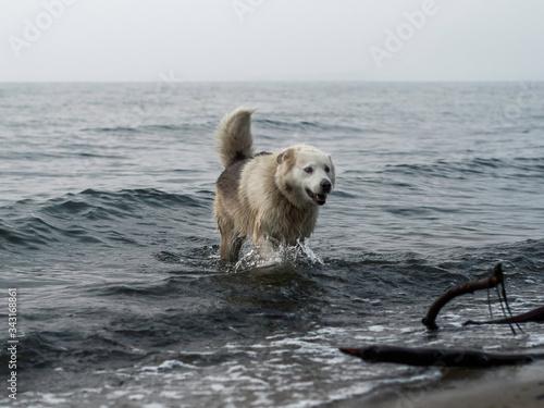 Pies w morzu