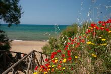 Spiaggia Vista Mare Con Cespug...