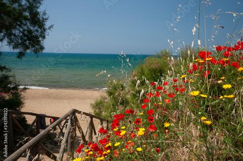 spiaggia vista mare con cespugli fioriti Canvas Print