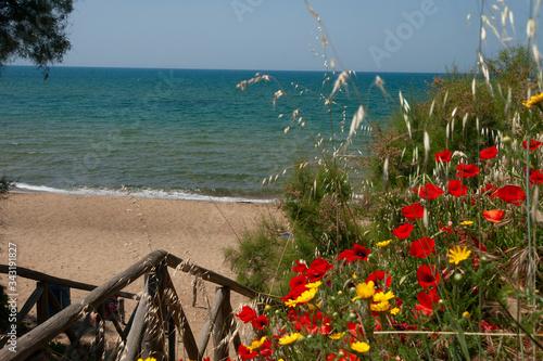 Photo spiaggia vista mare con cespugli fioriti
