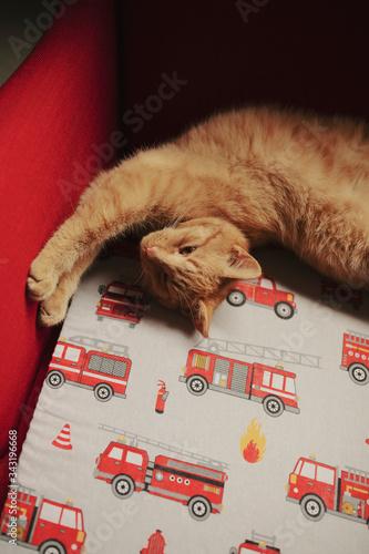 rudy kot w domu Wall mural