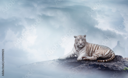 White Tiger on top of the rock between the clouds Wallpaper Mural