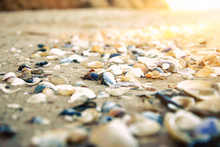 Sea Shells On The Sand (shallo...