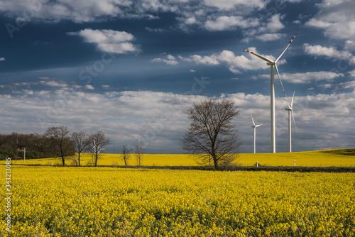Fototapeta Pejzaż  w wiosenne popołudnie. Wiatrak na rzepakowym polu. obraz