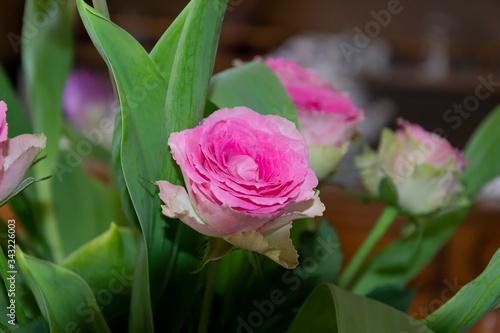 photo d'un bouquet de rose de couleur rose et blanche avec son feuillage Wallpaper Mural
