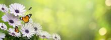 Flower Leaf Background Bokeh B...