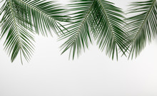 Tropical Palm Leaves Border Frame Isolated White Background