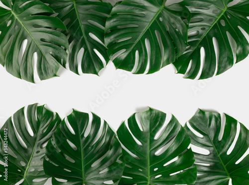 Fototapety, obrazy: Tropical monstera border frame on white background isolated