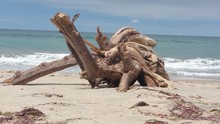 Surface Level Of Driftwood On ...