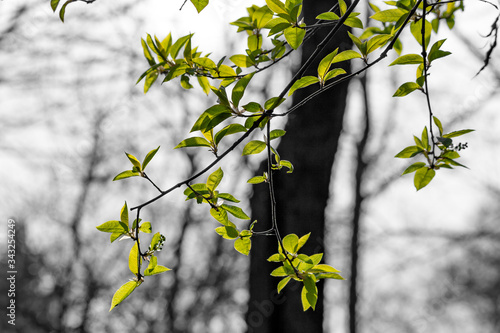 Bright green foliage on a gray ambient background Wallpaper Mural
