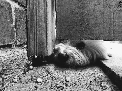 Photo Dog Relaxing By Gate On Street