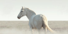 White Horse In The Fog Stands ...