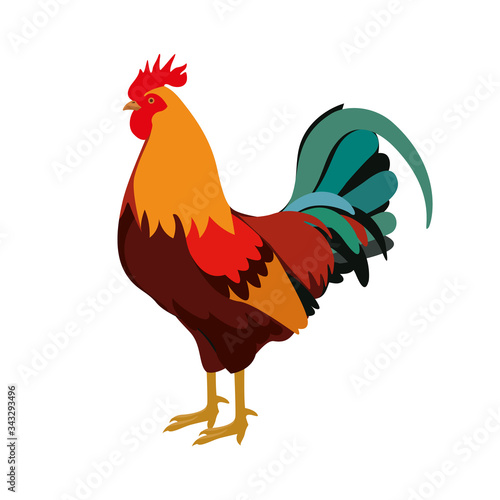 Farm animals cock rooster vector Poster Mural XXL