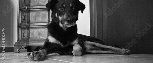 Portrait Of Dog Relaxing At Home Canvas Print