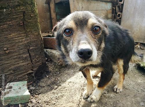 Photo Portrait Of Stray Dog On Field