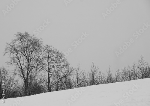 Bare Trees On Snow Covered Field Against Clear Sky © roberto anania/EyeEm