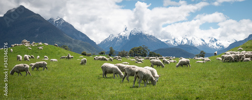 Obraz na płótnie Panoramic shot of herd of sheep grazing on the green meadows with mountains in b