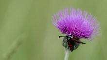 Close-up Of Moth On Purple Flower