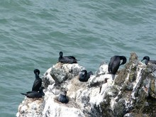 High Angle View Of Cormorants Perching On Rock By Sea