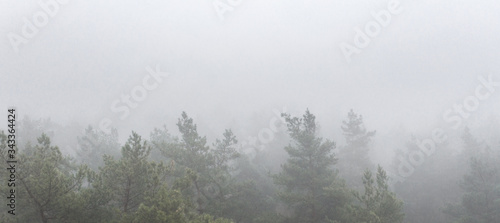 Obraz Foggy Autumn colorful Deciduous Forest. Dense forest early in the morning - fototapety do salonu