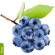 Branch Of Fresh Blueberries On...