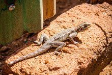 High Angle Close-up Of Lizard