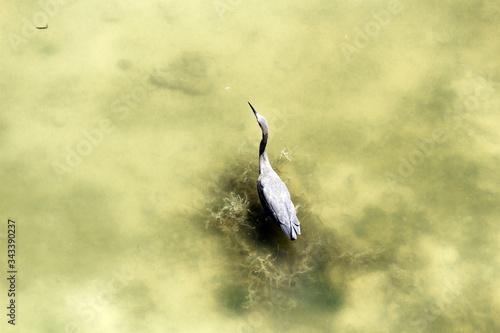 Aves de Holbox, Quintana Roo. México Canvas Print