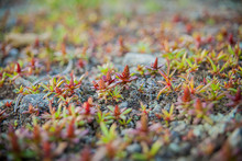Plants With Thick Leaves On A Blurred Background.