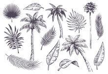 Sketch Palm Trees And Leaves. ...
