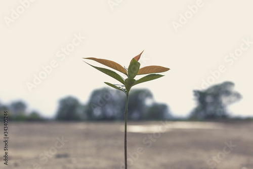 Photo Save world save life concept, Seedlings are growing because of soil fertility with various minerals and nitrogen, Trees help absorb carbon dioxide and release oxygen in the air