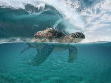 Imaginary Fictional Dreamy Sea...