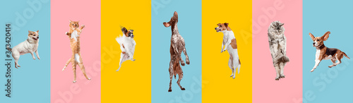 Papel de parede Young dogs jumping, playing, flying
