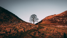 Lone Tree Between A Dip In The...