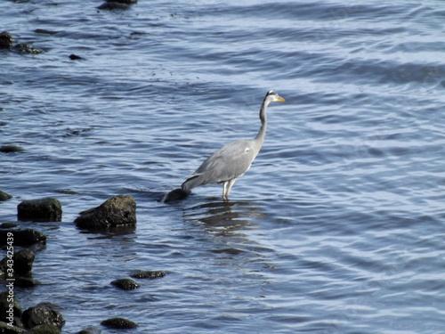 Un ave en el mar Canvas Print