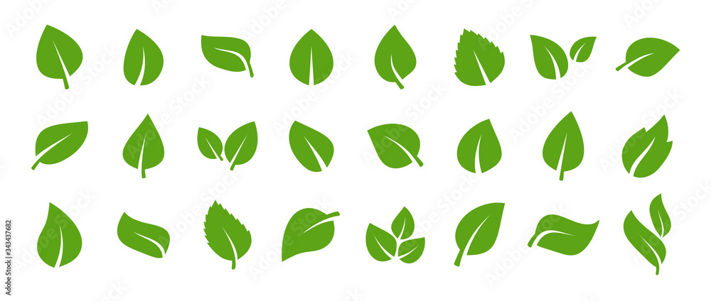 Fototapeta Set of green leaf icons. Green color. Leafs green color icon logo. Leaves on white background. Ecology. Vector illustration.