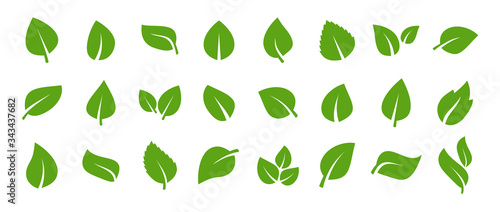 Fototapeta Set of green leaf icons. Green color. Leafs green color icon logo. Leaves on white background. Ecology. Vector illustration. obraz