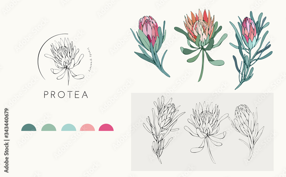 Fototapeta Protea logo and flowers. Hand drawn wedding herb, plant and monogram with elegant leaves for invitation save the date card design. Botanical rustic trendy greenery