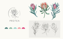 Protea Logo And Flowers. Hand Drawn Wedding Herb, Plant And Monogram With Elegant Leaves For Invitation Save The Date Card Design. Botanical Rustic Trendy Greenery
