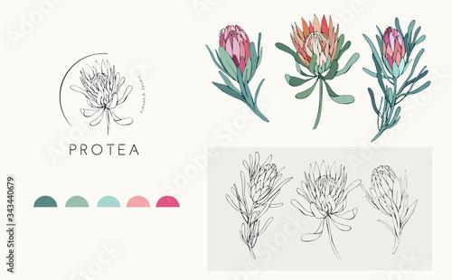 Canvastavla Protea logo and flowers