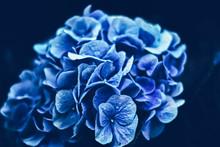 Blooming Flowers In A European...