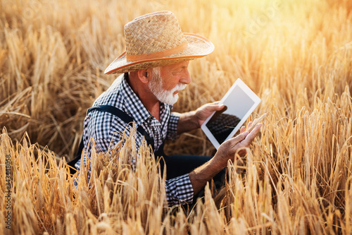 Photo Sixty years old agronomist inspecting wheat field and using tablet computer