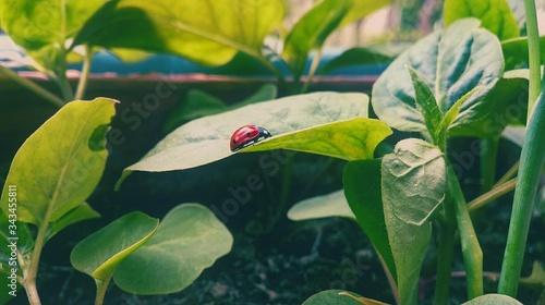 Obraz na plátně Close-up Of Ladybug On Plant