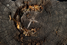 Old Felled Tree Trunk In The F...