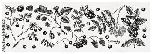 Valokuvatapetti Summer berries collection