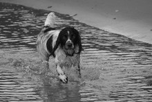 Portrait Of Wet English Spring...
