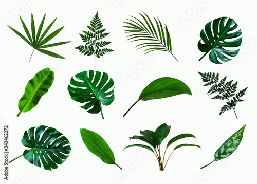 Papier Peint - set of green monstera palm and tropical plant leaf on  white background for design elements, Flat lay