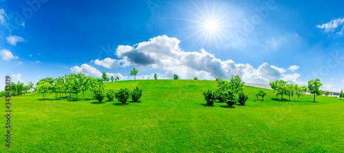 Green grass and tree on a sunny day. - 343463819